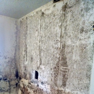 Mold Damage Restoration Ocala, FL