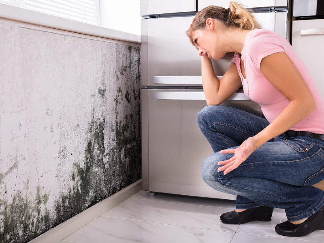 Find Mold Remediation and Removal Services in Ocala, FL